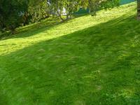 Bonex Group: новый заказ на озеленение территории возле Печёрского монастыря |